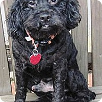 Adopt A Pet :: Dusty - Ocala, FL