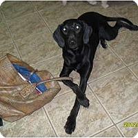 Adopt A Pet :: Lilly - Courtesy post - Glastonbury, CT