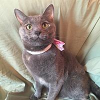 Adopt A Pet :: Ariel - Cerritos, CA