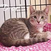 Adopt A Pet :: Dior - Ocean City, NJ