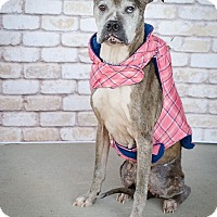 Adopt A Pet :: Winona Needs a Retirement Home - Quentin, PA