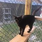 Adopt A Pet :: Maximus - West Palm Beach, FL
