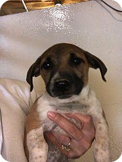 Hound (Unknown Type) Mix Puppy for adoption in Folsom, Louisiana - John Boy