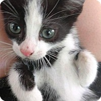 Adopt A Pet :: Malcolm - Centreville, VA