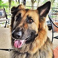 Adopt A Pet :: Wrigley - Gretna, NE