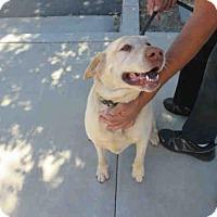 Adopt A Pet :: SADIE - Santa Maria, CA