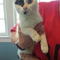 Adopt A Pet :: Belanna - Salamanca, NY