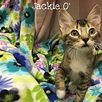 Adopt A Pet :: Jackie O' - Foothill Ranch, CA