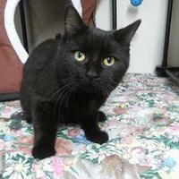 Adopt A Pet :: Simon - Greenville, PA