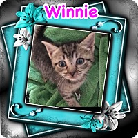 Adopt A Pet :: Winnie - Brentwood, NY