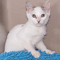 Adopt A Pet :: Cutethree - Elmwood Park, NJ
