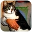 Photo 3 - Domestic Shorthair Cat for adoption in Rochester, Michigan - Ace
