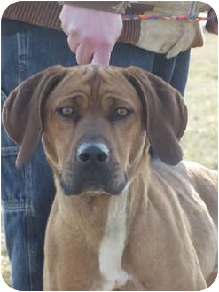 Hound (Unknown Type) Mix Dog for adoption in Defiance, Ohio - Winona