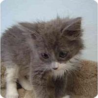 Adopt A Pet :: Willow - Modesto, CA