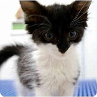 Adopt A Pet :: Squirrel - Modesto, CA