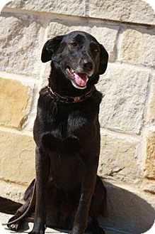 German Shepherd Dog/Border Collie Mix Dog for adoption in Georgetow, Texas - Mac