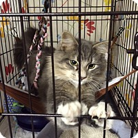 Adopt A Pet :: Ratatouille - Byron Center, MI