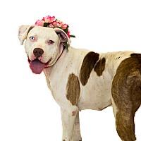 Adopt A Pet :: Luna - St. Cloud, FL