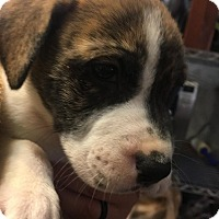 Adopt A Pet :: Rubble - Savannah, GA