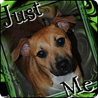 Adopt A Pet :: Stella - Crowley, LA