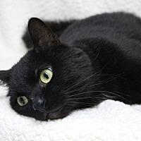 Adopt A Pet :: Nazir - Logan, UT
