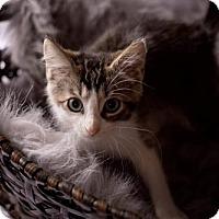 Adopt A Pet :: Tobias171409 - Atlanta, GA