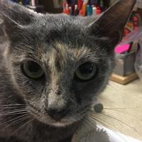Adopt A Pet :: Jenna - Cumming, GA