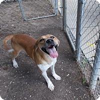 Adopt A Pet :: No Name - Copperas Cove, TX