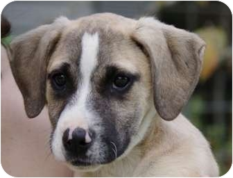 Terrier (Unknown Type, Small) Mix Puppy for adoption in Hartford, Connecticut - Travis