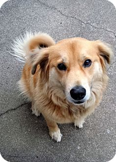 Golden Retriever Mix Dog for adoption in Proctorville, Ohio, Ohio - Lokey