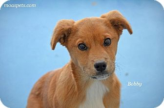 Hound (Unknown Type) Mix Puppy for adoption in Danielsville, Georgia - Bobby