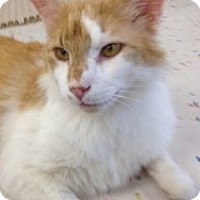 Adopt A Pet :: Armani - Phoenix, AZ