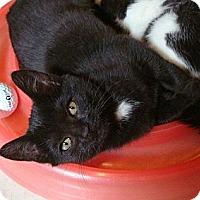 Adopt A Pet :: Mindy - Port Republic, MD