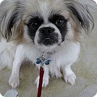Adopt A Pet :: Bandit - Baton Rouge, LA