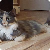 Adopt A Pet :: Lourdes - Mount Clemens, MI