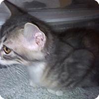 Adopt A Pet :: Baber - North Highlands, CA