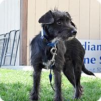 Adopt A Pet :: Kenny - Meridian, ID