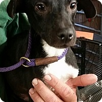 Adopt A Pet :: Hugh - Gainesville, FL