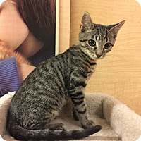 Adopt A Pet :: Peanut - Jackson, NJ