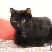 Adopt A Pet :: Sadie - Yukon, OK