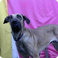 Adopt A Pet :: URGENT 6/25@DEVORE San Bern - San Bernardino, CA