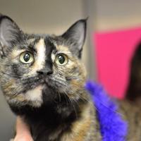 Adopt A Pet :: Baby - Redmond, OR