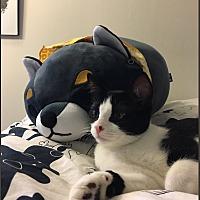Adopt A Pet :: Joffrey - Los Angeles, CA