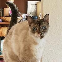 Adopt A Pet :: Delia - Apopka, FL