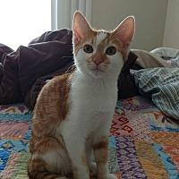 Adopt A Pet :: Dandy  Boy - Modesto, CA