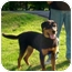 Photo 3 - Rottweiler Dog for adoption in Rexford, New York - Tara