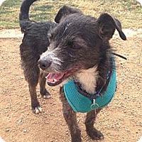 Adopt A Pet :: BAXTER - Salt Lake City, UT