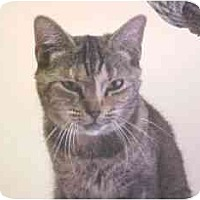 Adopt A Pet :: Stacy - Lunenburg, MA