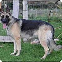 Adopt A Pet :: Tessa - Hamilton, MT