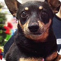 Adopt A Pet :: Mac - Chicago, IL